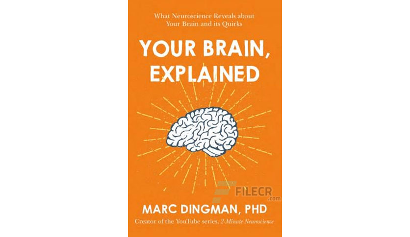 Your Brain, Explained by Marc Dingman